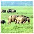 Jim Corbett Wildlife Safari Guide