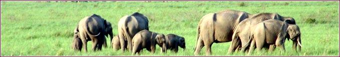 wildlife eco tourism corbett, wildlife tours corbett, tourist attractions in corbett, corbett wildlife guide