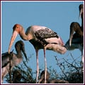 Keoladeo Ghana Bird Sanctuary Guide